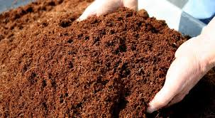 Growing in Coco Coir-The Essentials
