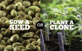 Seeds or Clones?