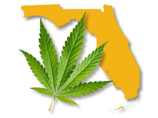 Experiencing Florida's Cannabis Culture