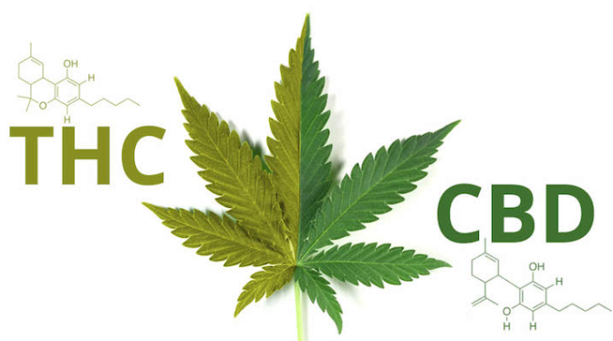 Price of CBD Products Relative to Traditional THC Products