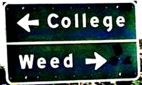 Medical Marijuana and Universities
